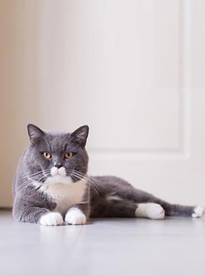 Avec votre chat, soyez félins pour l