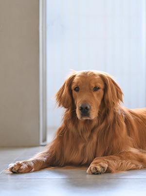 Une vie de chien, ce n